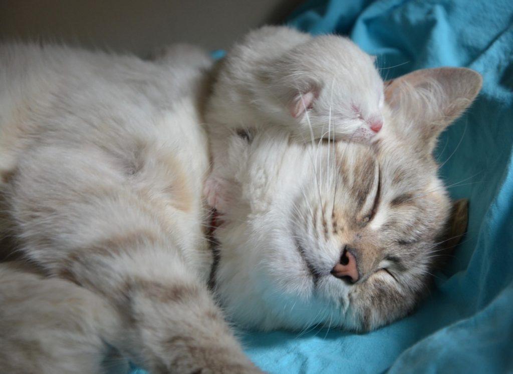 Katzenbaby mit Mutter