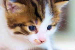 Babykatze Kaufen