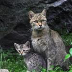 Babykatze mit Mutter