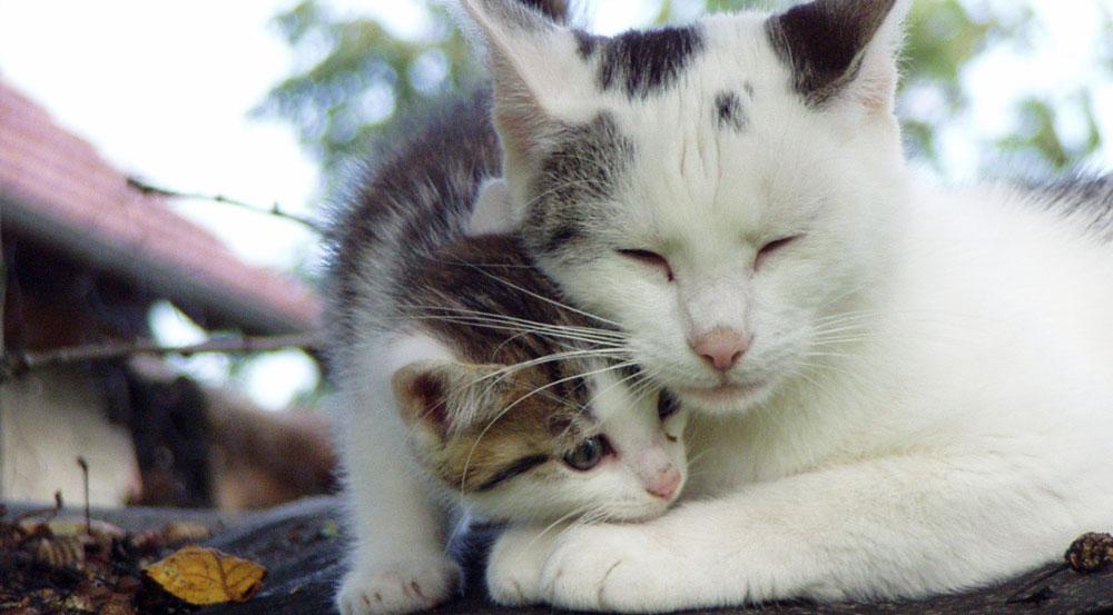 Katzenbaby-mit-Mutter
