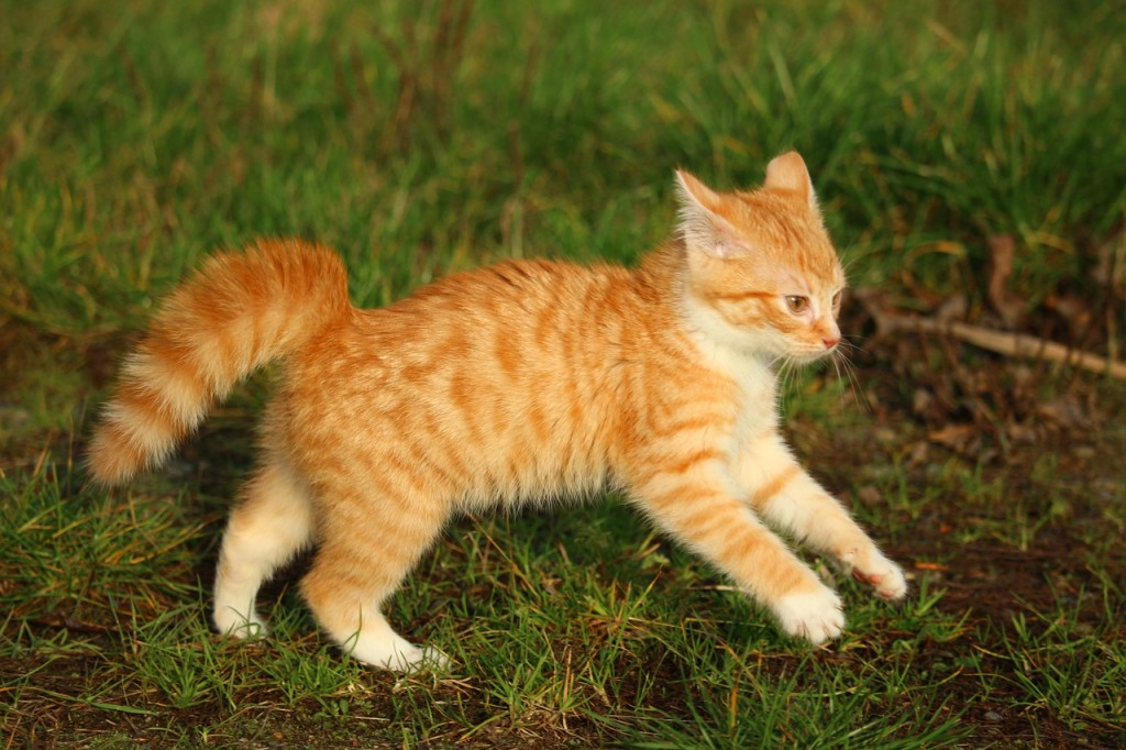 Katzen in Bewegung leiden seltener an Verstopfung