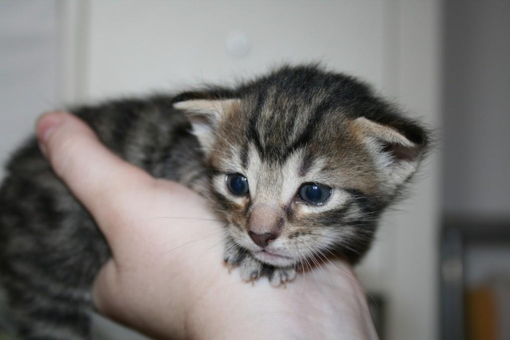 Duchfall bei Katzenbabys muss sehr ernst genommen werden