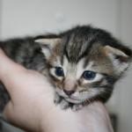 Was tun wenn das Katzenbaby Durchfall hat?