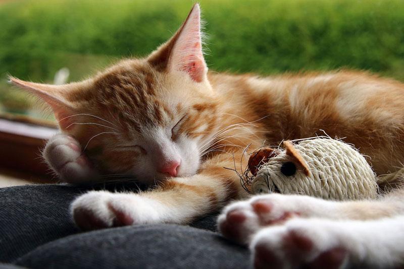 So gerne Katzenbabys spielen, ab und zu brauchen auch sie Ruhe (touchingpics.com / pixelio.de)