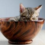 Was trinken Katzenbabys?