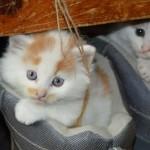 Katzenbaby gefunden – Was tun?
